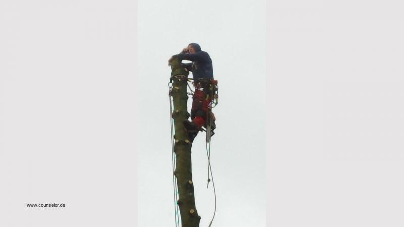 Mann auf Baum Luftige Höhe