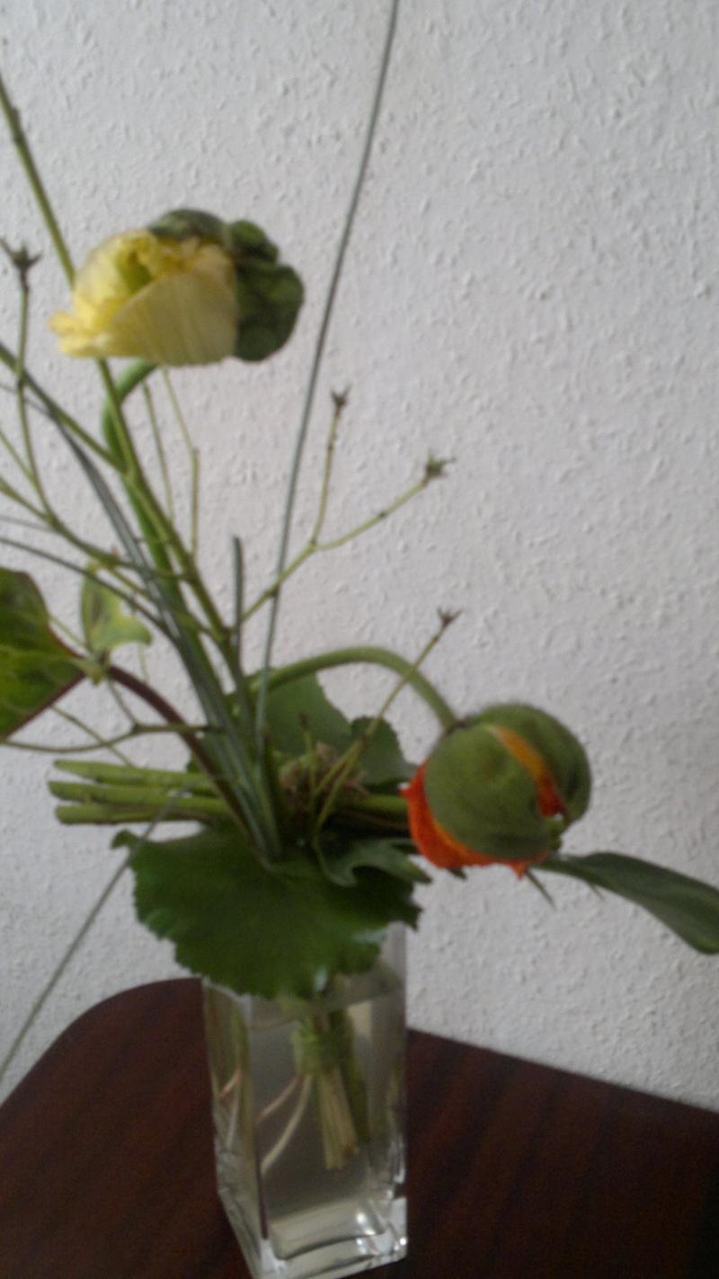Knollenbluemchen
